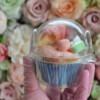 cupcakes-in-plastic-doos-per-1-verpakt